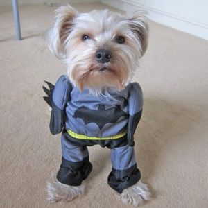 Small Dog Batman Costume